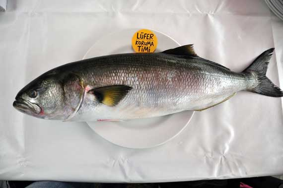 Balık bayramı, pastırma yazı